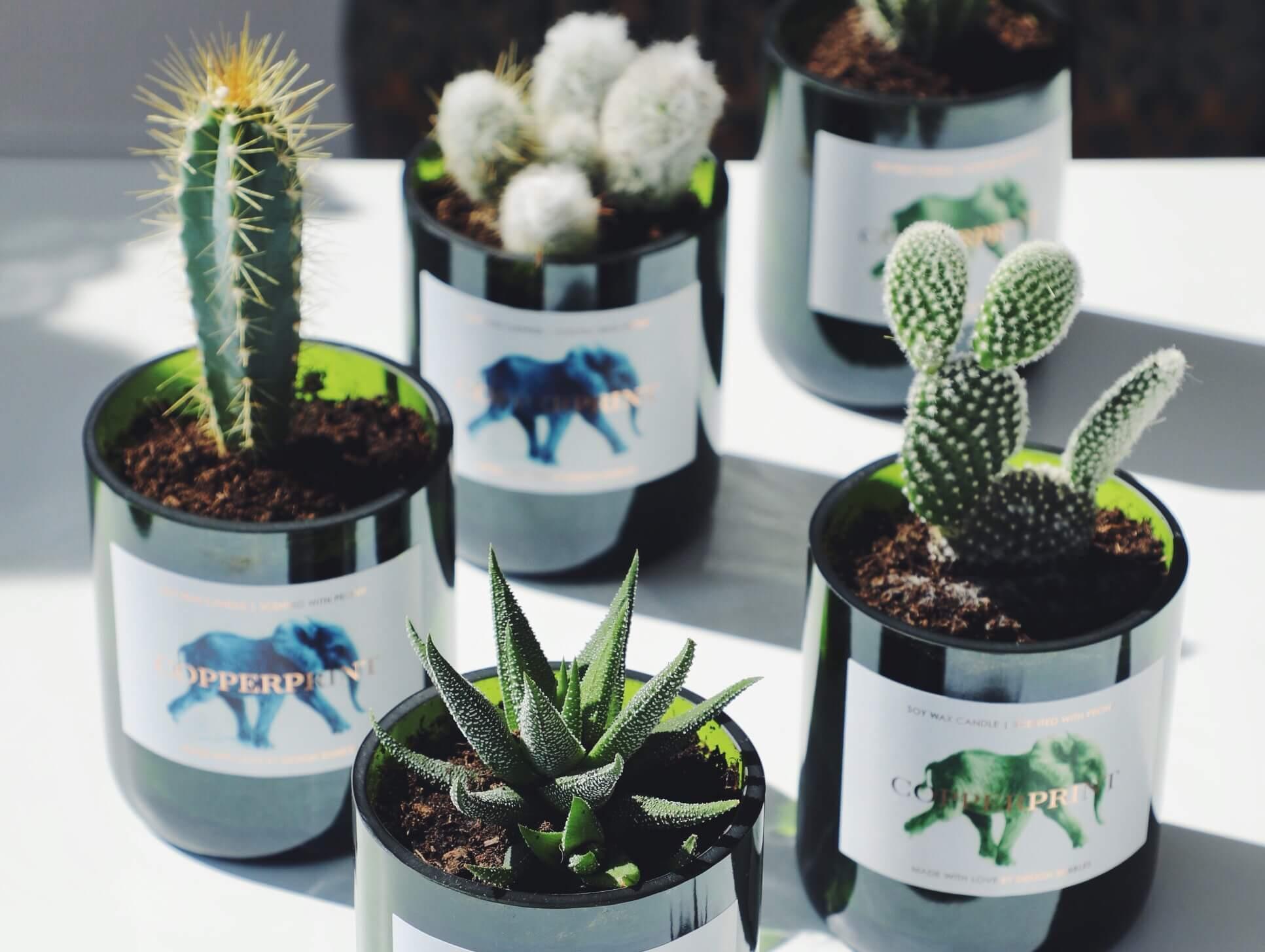 design bubbles beauty greenery sukkulenten kakteen mini nachhaltige interior trends